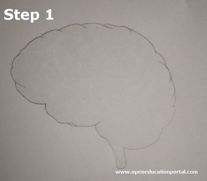 how to draw human brain step1