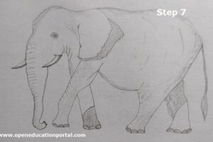 how-to-draw-elephant-for-kids-7
